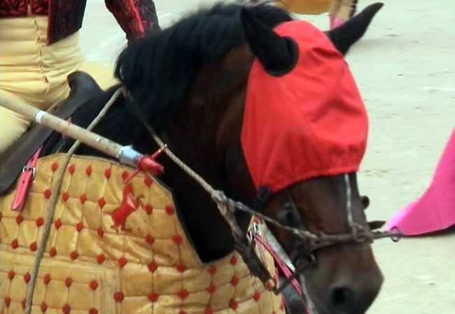 caballo-ojos-tapados
