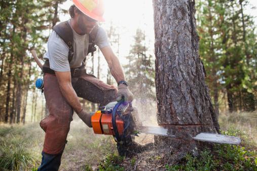 USA, Montana, Lakeside, lumberjack felling tree